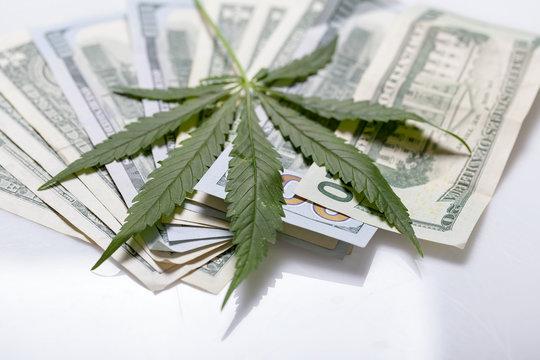 hemp leaves background on dollars