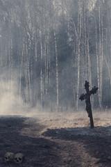 Halloween mystical background with dark forest
