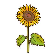 Sunflower cartoon floral drawing. Vector illustration