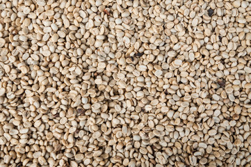 raw  and roasted coffee beans,green unroasted coffee beans,for background