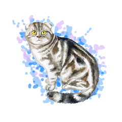 Watercolor close up portrait of popular Scottish fold shorthair cat breed isolated on abstract background. Loop-eared marble colouration highland. Hand drawn home pet. Greeting card design. Clip art