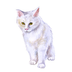 Watercolor close up portrait of american longhair Maine Coon cat breed isolated on white background. Rare pure white coloration. Hand drawn home pet Greeting birthday card design clip art illustration