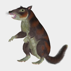 Cronopio Mammal on White - Cronopio was a squirrel-sized mammal that lived with the dinosaurs in the Cretaceous Period of Argentina, South America.