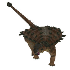 Pinacosaurus Dinosaur on White - Pinacosaurus was a herbivorous Ankylosaurus that lived in the Cretaceous Period of Mongolia and China.