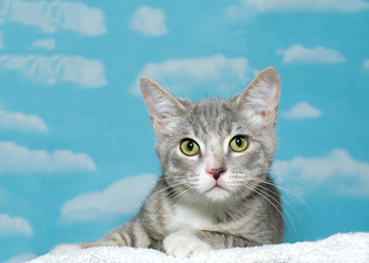 gray and white striped tabby kitten, approximately 2 months old, laying on white blanket looking at viewer. Blue background sky with white clouds. yellow and green eyes. Copy space.