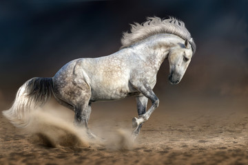 Grey andalusian horse in motion at dramatic background
