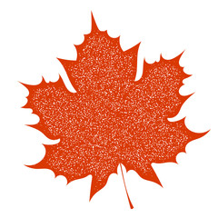 Maple Leaf with grange texture on a white background. Autumn red