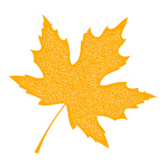 Yellow Maple Leaf with grange texture on a white background. Aut