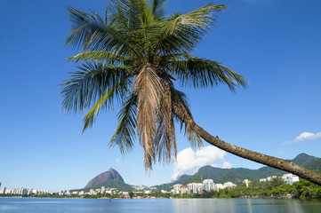 Scenic skyline morning view of Lagoa Rodrigo de Freitas lagoon in Rio de Janeiro, Brazil with the upscale neighborhoods of Ipanema and Leblon reflecting between palm trees on the calm horizon