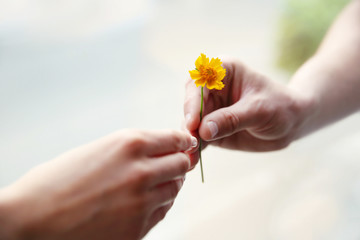 Flower and human hands on blurred background