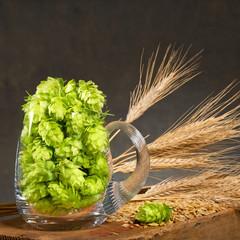 Hop cones in the glass of beer with malt