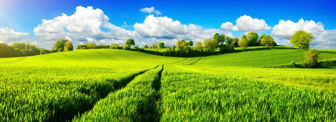 Photo sur Plexiglas Pres, Marais Ländliche Idylle, Panorama mit weiten grünen Wiesen und blauem Himmel