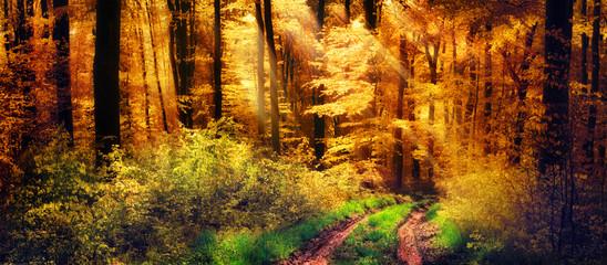 Wall Mural - Schöner Wald im Herbst, Lichtstrahlen fallen auf einen Waldweg