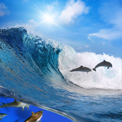 Underwater photo splitted two parts. Two happy playful dolphins leaping from ocean breaking surfing wave to foam and other part of its flock swimming underwater