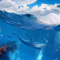 A dolphin swimming underwater and above him there is a tropical cloudscape