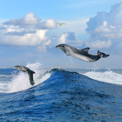 beautiful cloudy seascape in daylight and two happy dolphins jumping out from blue curly breaking surfing wave