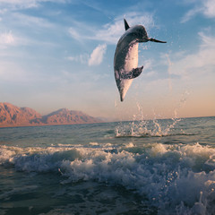 ocean-view beautiful dolphin jumped from water at the sunrise
