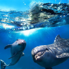 two dolphins underwater and breaking splashing wave above them