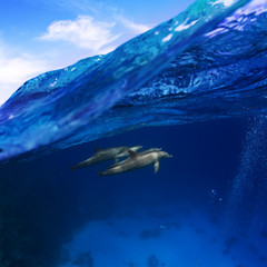 Submerged image splitted by waterline. A family of dolphins with a baby swimming underwater underneath of sea wave