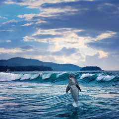 beautiful funny dolphin jumping up from sea surface