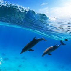 two dolphins diving underwater and breaking splashing wave above them