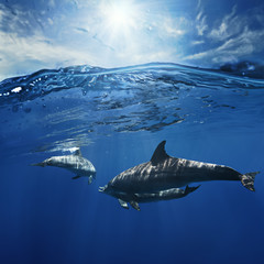 a pair of dolphins playing in sunrays underwater