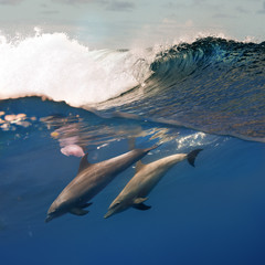 Two Dolphins Diving Under Crashing Ocean Wave
