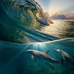 hawaiian beautiful dolphins playing under ocean breaking surfing wave