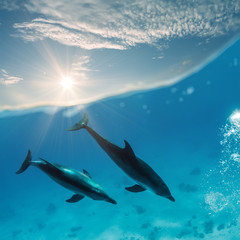 two beautiful dolphins swimming underwater through sunrays with waterline