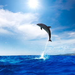 A wild dolphin jumped from shinig vibrant ocean water with beautiful seascape