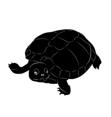 vector turtle. black and white animal