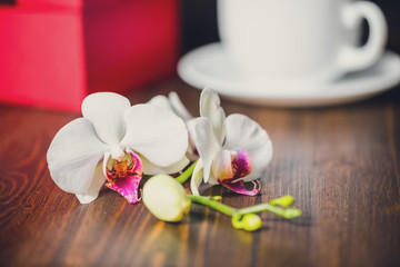 beautiful festive concept of greeting red box with bow, orchid f