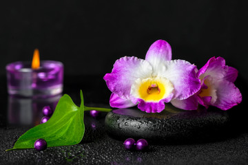 spa still life of purple orchid dendrobium with dew on black zen stone, green leaf, beads and lilac candles, close up
