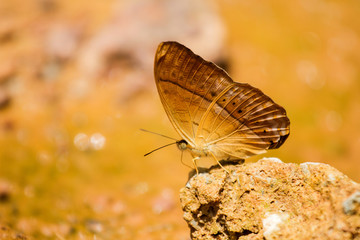 Butterflies eat salt marsh