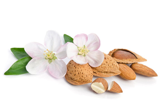 Almonds with leaves and flowers close up on the white background