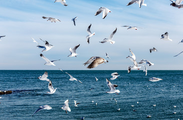 Hungry gulls circling over the winter beach in search of food on