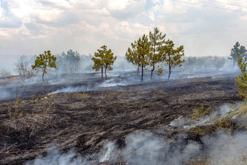 Forest fires and wind dry completely destroy the forest and step