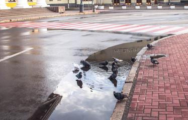 Birds on bathing