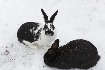 Zwei Hasen im Schnee