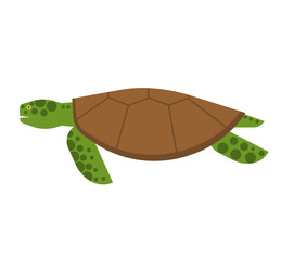 Marine Turtle Illustration