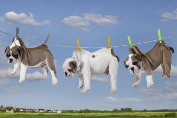 Puppies drying on washing line