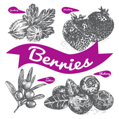 Vector illustration black and white set with berries