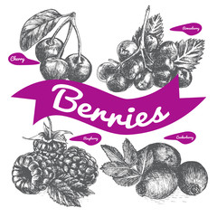 Vector illustration black and white set with berries.