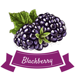 Vector illustration colorful set with blackberry