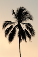 Silhouette of a palm tree on a tropical island against a sunset.