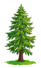 Vector drawing of fir tree