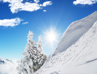 Wall Mural - Beautiful winter landscape with trees