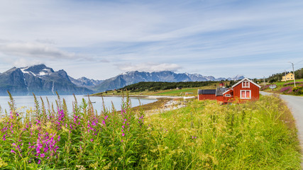 Typical Scandinavian landscape with  purple loosestrife along a lake and a glacier in the background