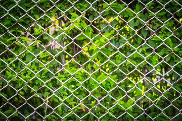 green plant be hide steel fence in the garden.