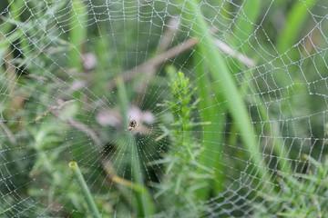 spiderweb photographed close-up